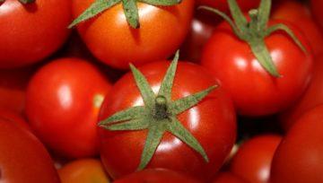 Rekordowy eksport warzyw i owoców z Almerii