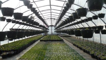 Misja dla importerów środków do produkcji rolnej do Almerii