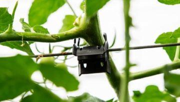 Producent akcesoriów do uprawy warzyw i owoców poszukuje importerów i dystrybutorów