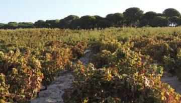 ONUCOOP – 6 producentów wina stołowego z Andaluzji szuka klientów w Polsce