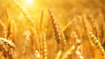 Forum Smart Agrifood 2021 (30 września - 1 października)